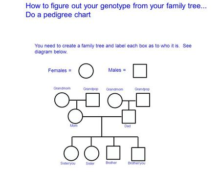 How to figure out your genotype from your family tree