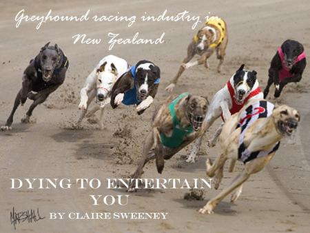 Greyhound racing industry in New Zealand Dying to entertain you By Claire Sweeney.