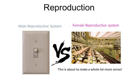 Reproduction This is about to make a whole lot more sense! Male Reproductive System Female Reproductive system.