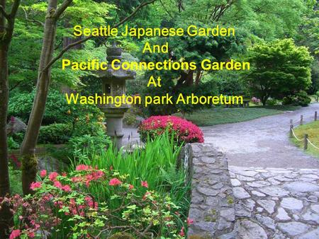 Seattle Japanese Garden And Pacific Connections Garden At Washington park Arboretum.