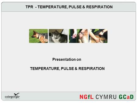 TPR - TEMPERATURE, PULSE & RESPIRATION Presentation on TEMPERATURE, PULSE & RESPIRATION.