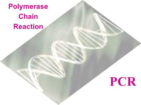 Polymerase Chain Reaction PCR What is PCR?  An in vitro process that detects, identifies, and copies (amplifies) a specific piece of DNA in a biological.