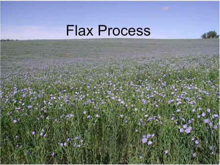 Flax Process. Flax plant (linum usitatissimum) a: roots; b: stem (containing fibers); c: leaves entire, narrow; d: flowers blue, somewhat white, pink.