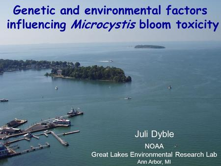 Genetic and environmental factors influencing Microcystis bloom toxicity Juli Dyble NOAA Great Lakes Environmental Research Lab Ann Arbor, MI.