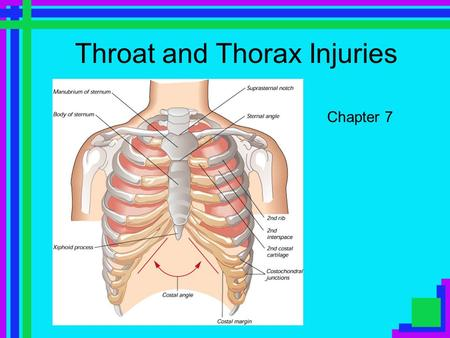 Throat and Thorax Injuries Chapter 7. Objectives Understand the basic anatomy of the throat and thorax. Understand how to prevent injuries of the throat.