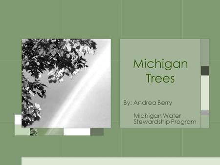 Michigan Trees By: Andrea Berry Michigan Water Stewardship Program.