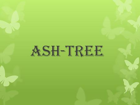 Ash-tree. Few words about the Ash-tree… Ash trees are medium to large trees of the genus fraxinus of the family Oleaceae (Olive-tree like). The family.