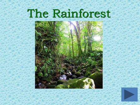 The Rainforest. oWhere are rainforests located?Where are rainforests located? oWhat kind of animals live in the rainforest?What kind of animals live in.