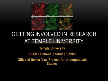 Temple University Russell Conwell Learning Center Office of Senior Vice Provost for Undergraduate Studies GETTING INVOLVED IN RESEARCH AT TEMPLE UNIVERSITY.