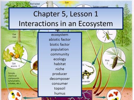 Chapter 5, Lesson 1 Interactions in an Ecosystem ecosystem abiotic factor biotic factor population community ecology habitat niche producer decomposer.