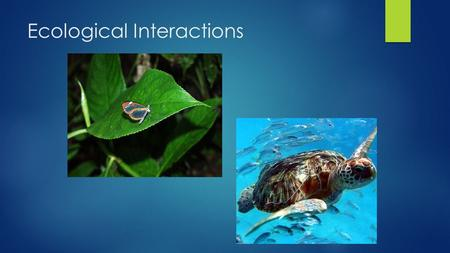 Ecological Interactions. What is Ecology  Ecology is the interactions between various organisms and their environments.  This includes interactions.