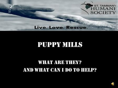 Puppy Mills What are they? And what can I do to help?