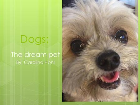 Dogs: The dream pet By: Carolina Hohl. Dogs are good for exercise, they need two to four walks a day.