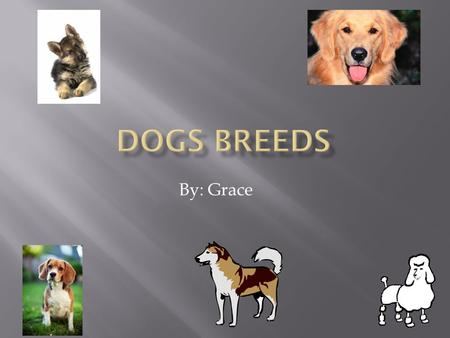 By: Grace 1. Opening 2. Beagles 3. Golden Retrievers 4. German Shepherds 5. Siberian Huskies 6. Poodles 7. Closing 8. Poem.
