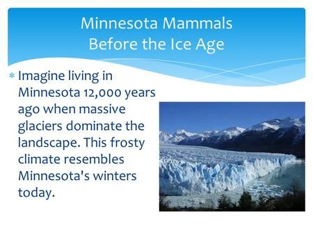Minnesota Mammals Before the Ice Age  Imagine living in Minnesota 12,000 years ago when massive glaciers dominate the landscape. This frosty climate resembles.