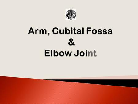 Arm, Cubital Fossa & Elbow Joint