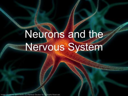 Neurons and the Nervous System. Nervous System –Central nervous system (CNS): Brain Spinal cord –Peripheral nervous system (PNS): Sensory neurons Motor.