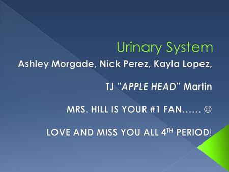 Urinary System Ashley Morgade, Nick Perez, Kayla Lopez,