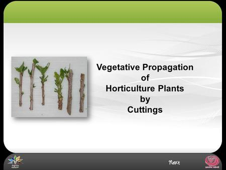Vegetative Propagation of Horticulture Plants by Cuttings.