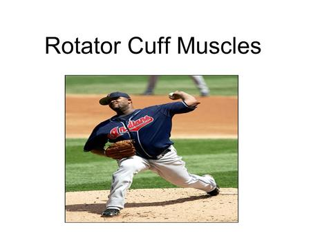 "Rotator Cuff Muscles. Four muscles, that form a ""cuff"" surrounding the head of the humerus and compress (hold down) the head of the humerus into the glenoid."