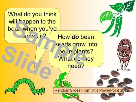 What do you think will happen to the bean when you've planted it? How do bean seeds grow into bean plants? What do they need? Sample Slide Random Slides.