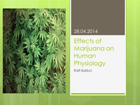 Effects of Marijuana on Human Physiology Rafi Balikci 28.04.2014 1.