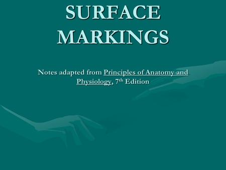 BONE LANDMARKS AND SURFACE MARKINGS Notes adapted from Principles of Anatomy and Physiology, 7 th Edition.