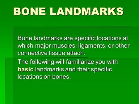 BONE LANDMARKS Bone landmarks are specific locations at which major muscles, ligaments, or other connective tissue attach. The following will familiarize.