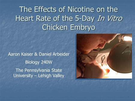 The Effects of Nicotine on the Heart Rate of the 5-Day In Vitro Chicken Embryo Aaron Kaiser & Daniel Arbeider Biology 240W The Pennsylvania State University.