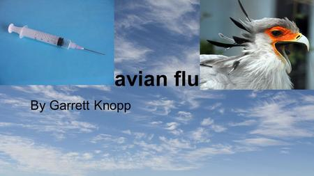 Avian flu By Garrett Knopp. Avian Flu The Avian Flu is a flu that is transmitted by bird, and can be spread to human by human to. It is very rare for.