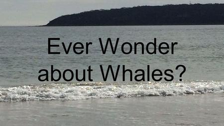 Ever Wonder about Whales?. Two Types of Whales Whales are grouped into two different types. Baleen and Toothed toothed whales.