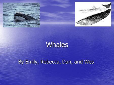 Whales By Emily, Rebecca, Dan, and Wes. Introduction This is a whale book made by four fourth graders. We read the story Whales by Seymour Simon. We read.
