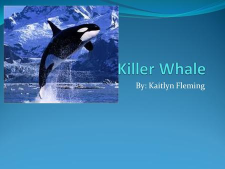 By: Kaitlyn Fleming. Killer Whale names Common name: Killer Whale Specific name: Orcinus Orca Other name: Wolves of the Ocean.