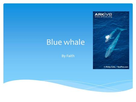 Blue whale By Faith. Blue whale lives in the ocean Biome.