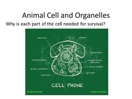 Animal Cell and Organelles Why is each part of the cell needed for survival?