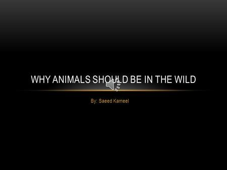 By: Saeed Kameel WHY ANIMALS SHOULD BE IN THE WILD.