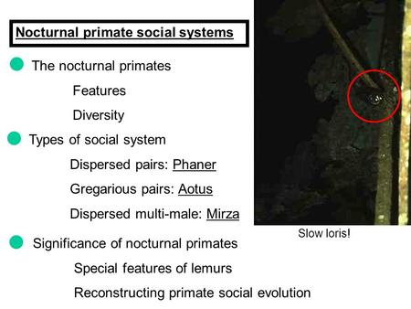 Nocturnal primate social systems The nocturnal primates Features Diversity Slow loris! Types of social system Dispersed pairs: Phaner Gregarious pairs: