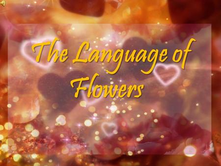 The Language of Flowers. A Plan Flowers hold a special significance in everybody's life. Every flower has some significance and holds an individual meaning.