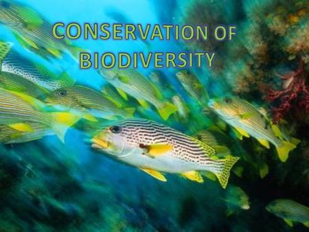 CONSERVATION OF BIODIVERSITY.