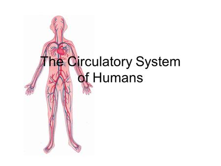 The Circulatory System of Humans What is that 'lub dub, lub, dub' noise in my chest? The noise is the sound of your heart as it pumps blood.