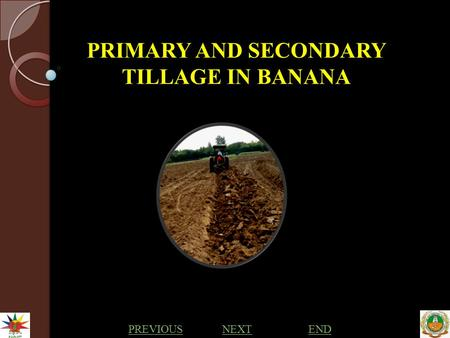 PRIMARY AND SECONDARY TILLAGE IN BANANA PREVIOUS NEXTEND.