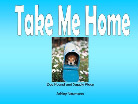 Dog Pound and Supply Place Ashley Neumann. Take Me Home Pounds main goal is to provide shelter to stray and abused dogs until they are found a safe home.