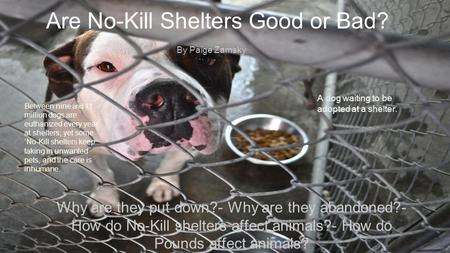 Are No-Kill Shelters Good or Bad?