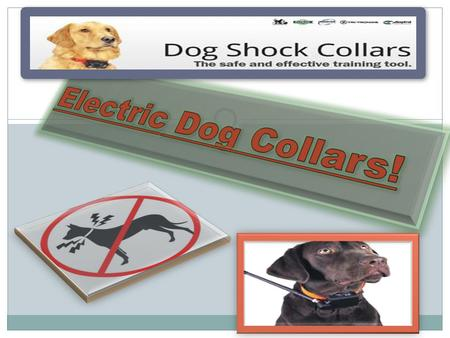 How do electric dog collars work? Speed of training and timing of simulation (immediate response) Effective sizes combinations (wont have to struggle.
