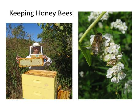 Keeping Honey Bees. Industrial Ag – Industrial Beekeeping.