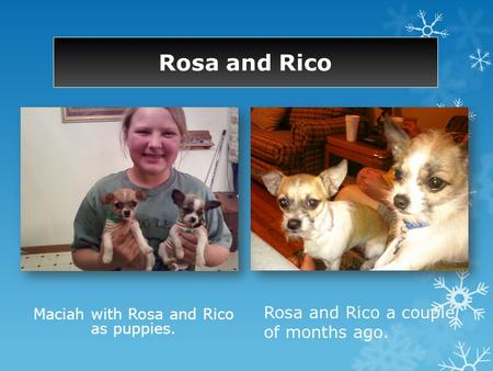 Rosa and Rico Maciah with Rosa and Rico as puppies. Rosa and Rico a couple of months ago.