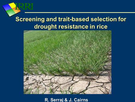 Screening and trait-based selection for drought resistance in rice R. Serraj & J. Cairns.