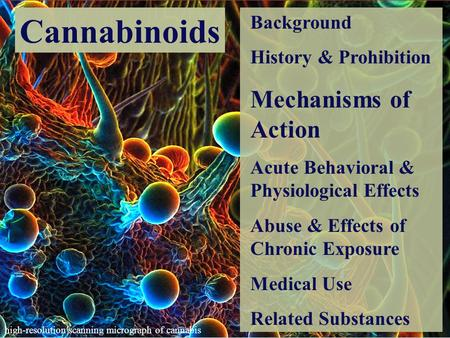 effects of the prohibition of marijuana The health effects of marijuana use  american college of pediatricians supports legislation that would continue the prohibition of the sale and recreational use .