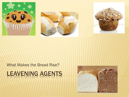 What Makes the Bread Rise?.  What's the difference?