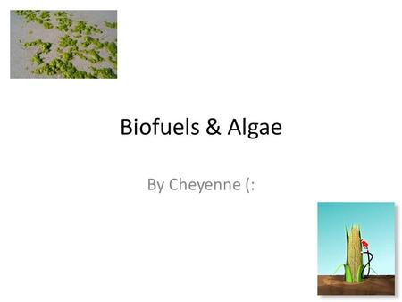 Biofuels & Algae By Cheyenne (:. Bio fuels They help with transportation and car needs Ethanol & Biodiesel are the two most common bio fuels, Ethanol.